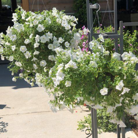 full bloom plant