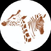 single image icon safari
